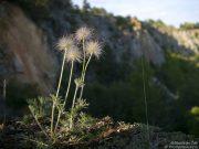 Fauna obklopená prachem z okolních lomů